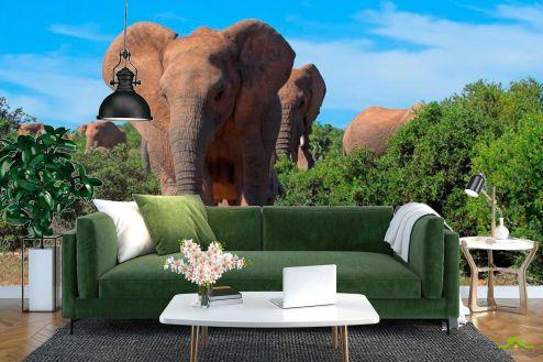 Слоны Фотообои Стадо слонов