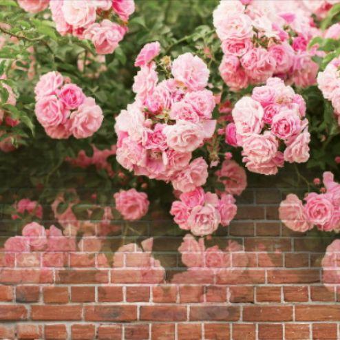 3Д  Фотообои Розы, стена купить