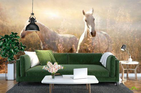 Животные Фотообои Лошадки