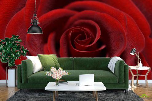 Розы Фотообои красная бархатная роза