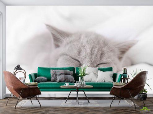 Животные Фотообои серый котёнок спит
