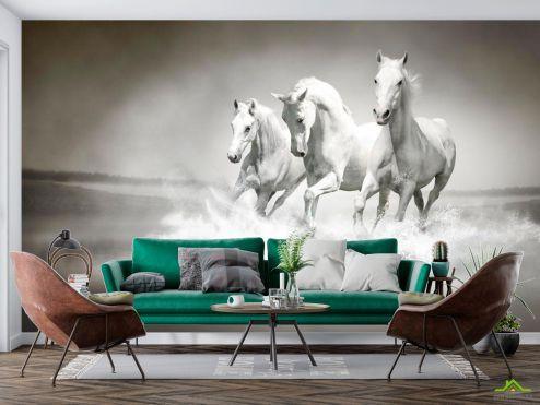 Животные Фотообои Белые кони