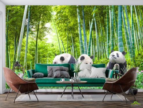 Природа Фотообои Панды в бамбуке