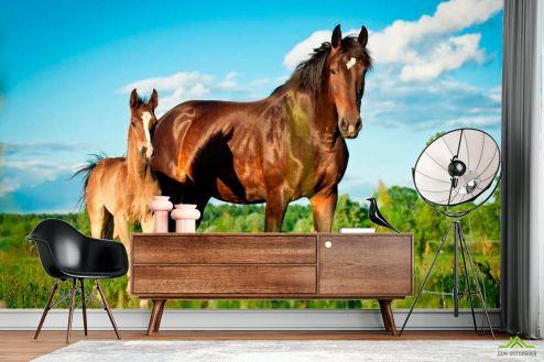 Лошади Фотообои Лошадь с жеребенком