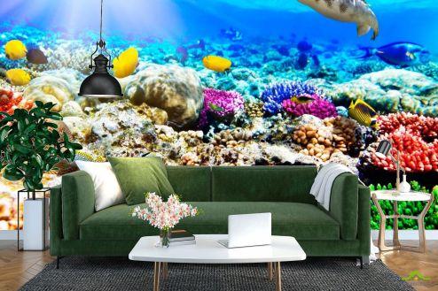 Рыбы и море Фотообои Подводный мир