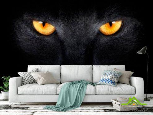 Коты Фотообои Черная кошка