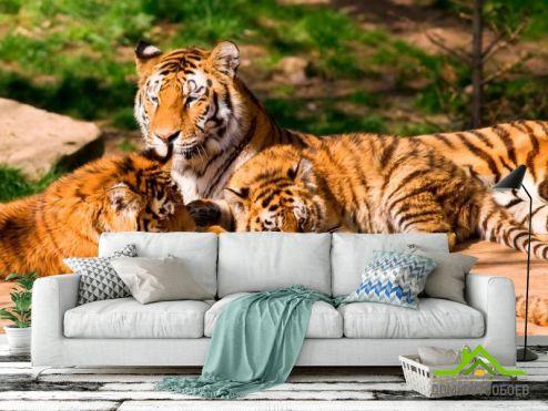 Тигры Фотообои Семья тигров