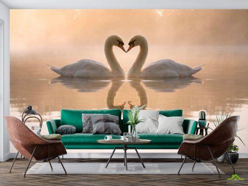 Птицы  Фотообои Пара лебедей