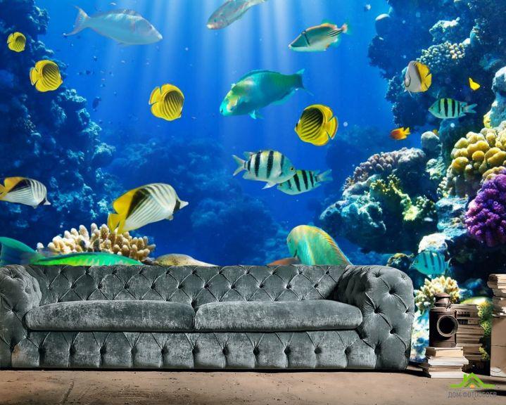 Фотообои рыбки