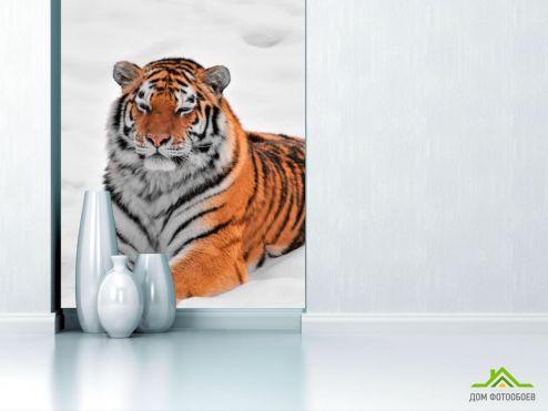 обои Животные Фотообои Тигр в снегу