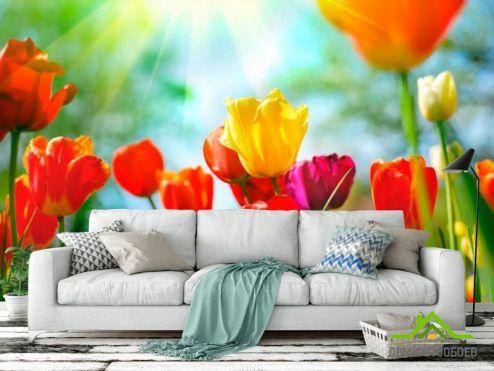 Тюльпаны Фотообои Тюльпаны разноцветные