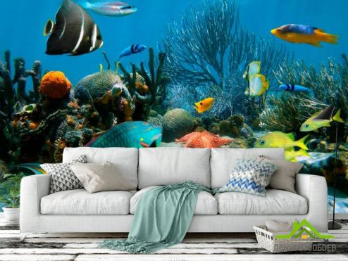 обои Море Фотообои Морские рыбы