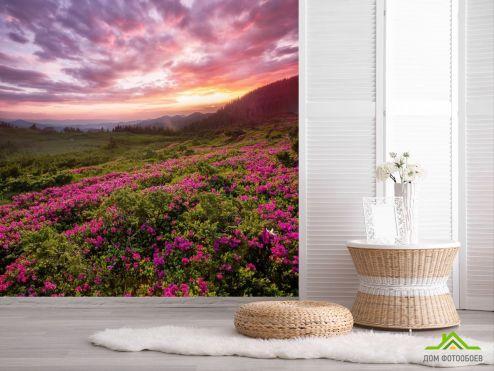 обои Природа Фотообои закат над сиреневыми цветами