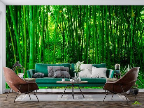 Природа Фотообои Молодой бамбук