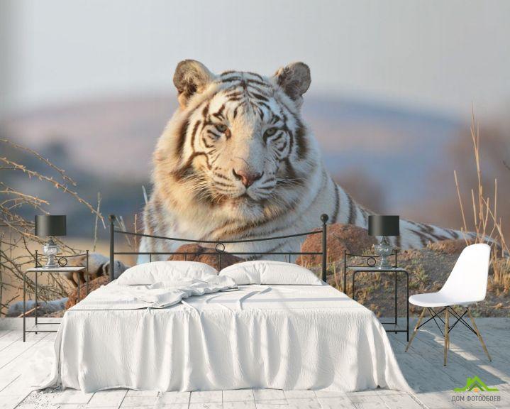 Фотообои белый тигр