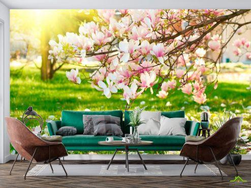 Природа Фотообои Отцвели вишневые цветы
