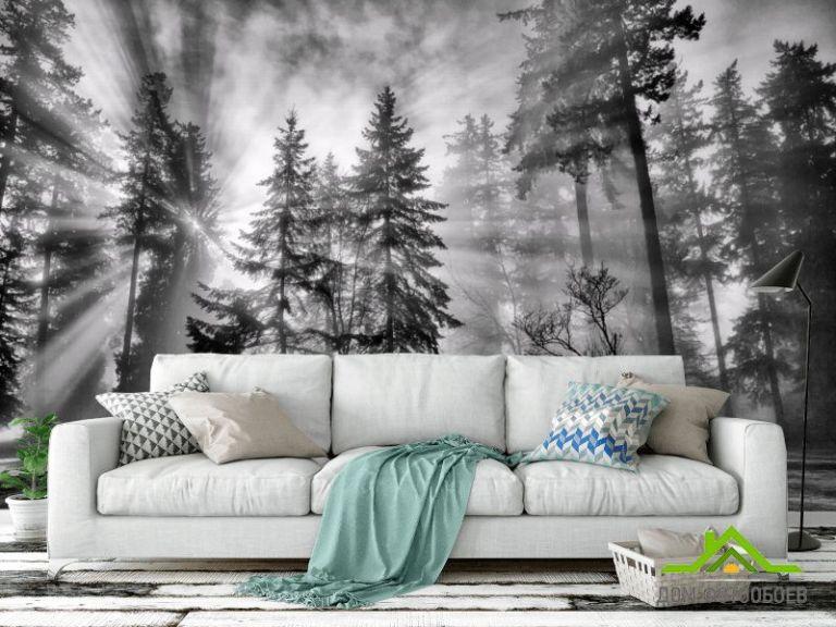 Фотообои Чб лес