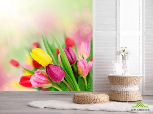 обои Цветы Фотообои Тюльпаны разных цветов
