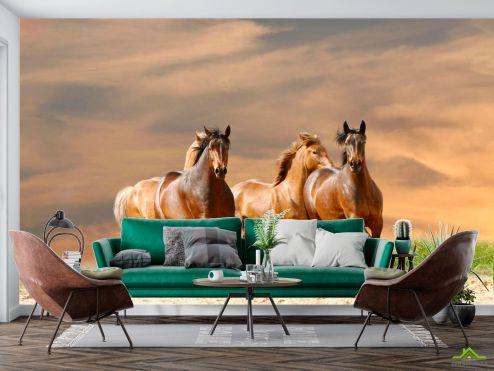 Лошади Фотообои Мустанги соревнуются