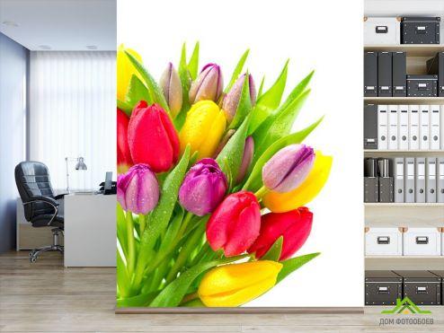 Тюльпаны Фотообои разноцветные тюльпаны с каплями