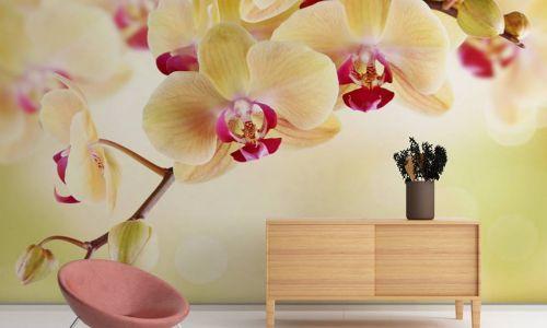 Фотообои в интерьере гостиной с фото - Фотообои Орхидея кремовая