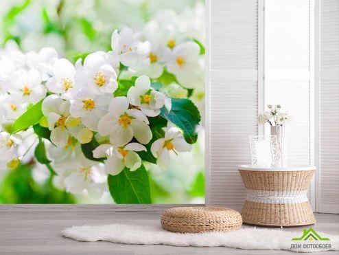 обои Абрикос Фотообои Абрикосовые маленькие цветы