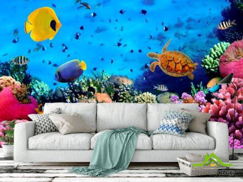 обои Море Фотообои Мир подводный. Красоты.