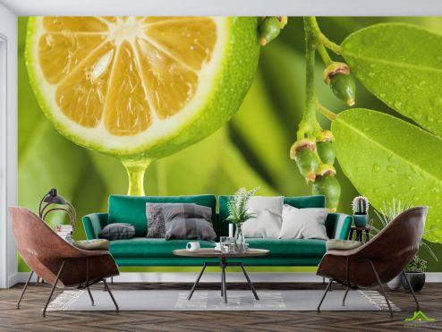 Еда и напитки Фотообои Яркий лимон