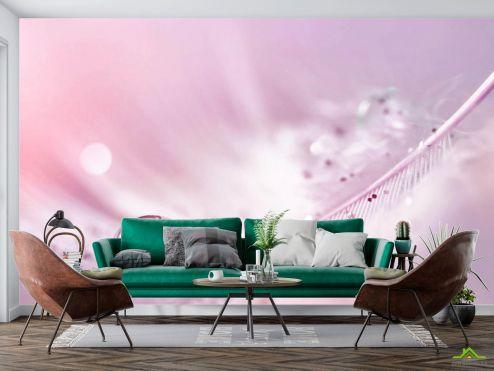 перья Фотообои Перо с росой на розовом фоне