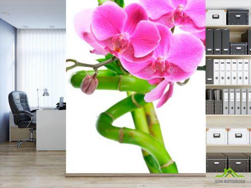 Бамбук  Фотообои Орхидея и бамбук