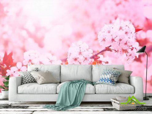 обои Цветы Фотообои Розовый вишневый цвет