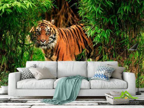 Тигры Фотообои Тигр в зарослях купить
