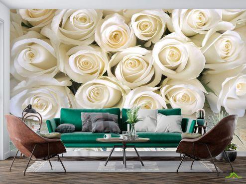 Цветы Фотообои Белые розы с росой купить