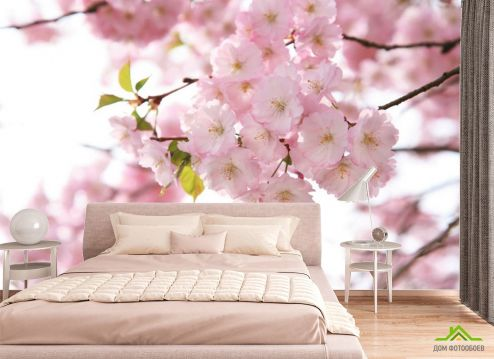 фотошпалери в спальню Фотошпалери квіти рожевої сакури