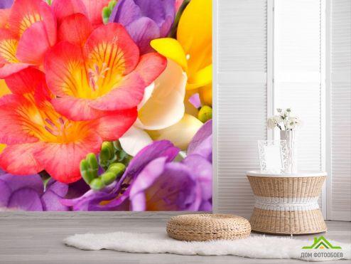 обои Цветы Фотообои Закругленные тюльпаны