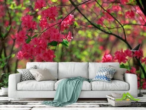 Кипарис Фотообои Цветущий кипарис