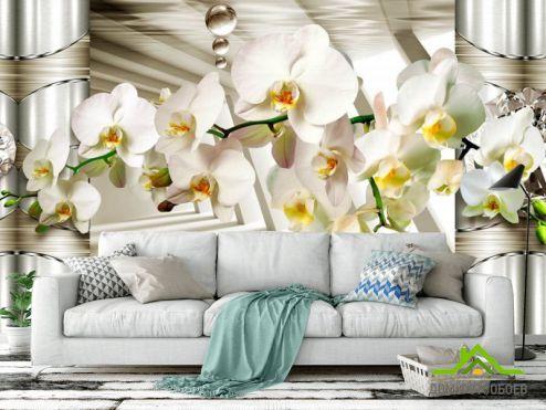 обои Цветы ФотообоиВетка орхидеи с камнями