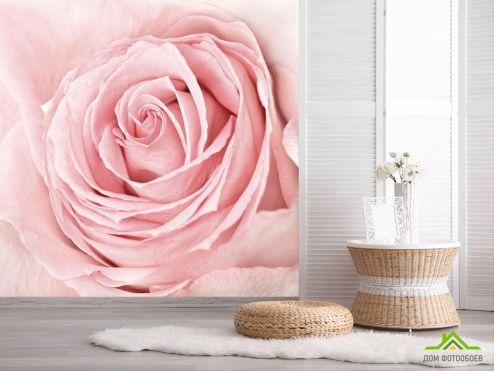 Розы Фотообои розовая роза