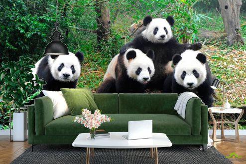 Панды Фотообои Панды в лесу