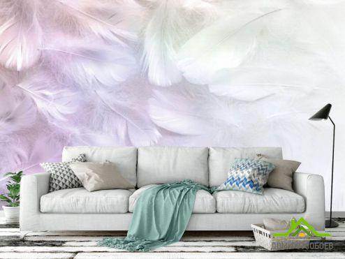 обои перья Фотообои Белые перья с розовым