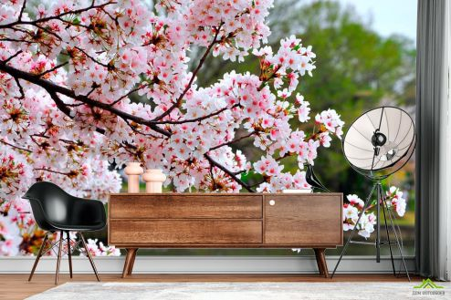 Вишня Фотообои Цветущий вишневый сад