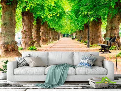 Зеленые  Фотообои Тоннель из деревьев