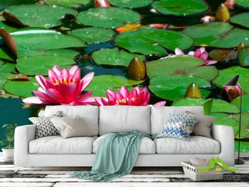 обои Кувшинки Фотообои Розовые кувшинки на воде