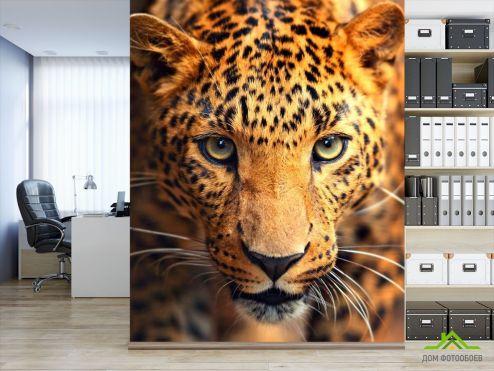 обои Гепарды Фотообои Любопытный гепард