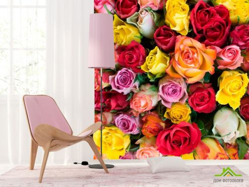 обои Розы Фотообои Розы разноцветные