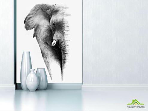 обои Слоны Фотообои Слон