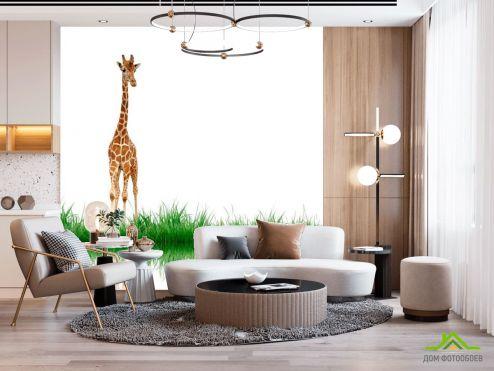 Жирафы Фотообои Жираф у воды