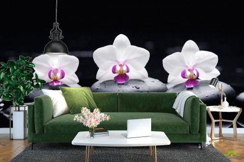 Черные  Фотообои Орхидея