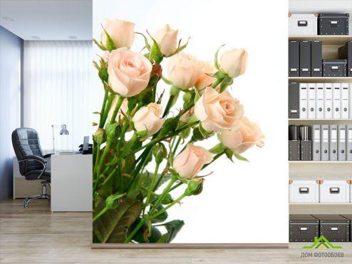 обои Цветы Фотообои Бежево-белые розы