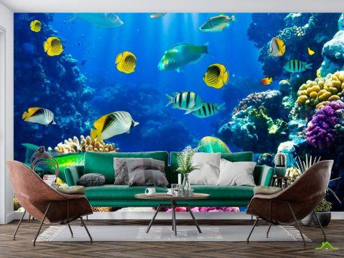 Рыбы и море Фотообои Много рыб